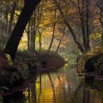 Sterkselse Aa bij Heeze in herfstsferen